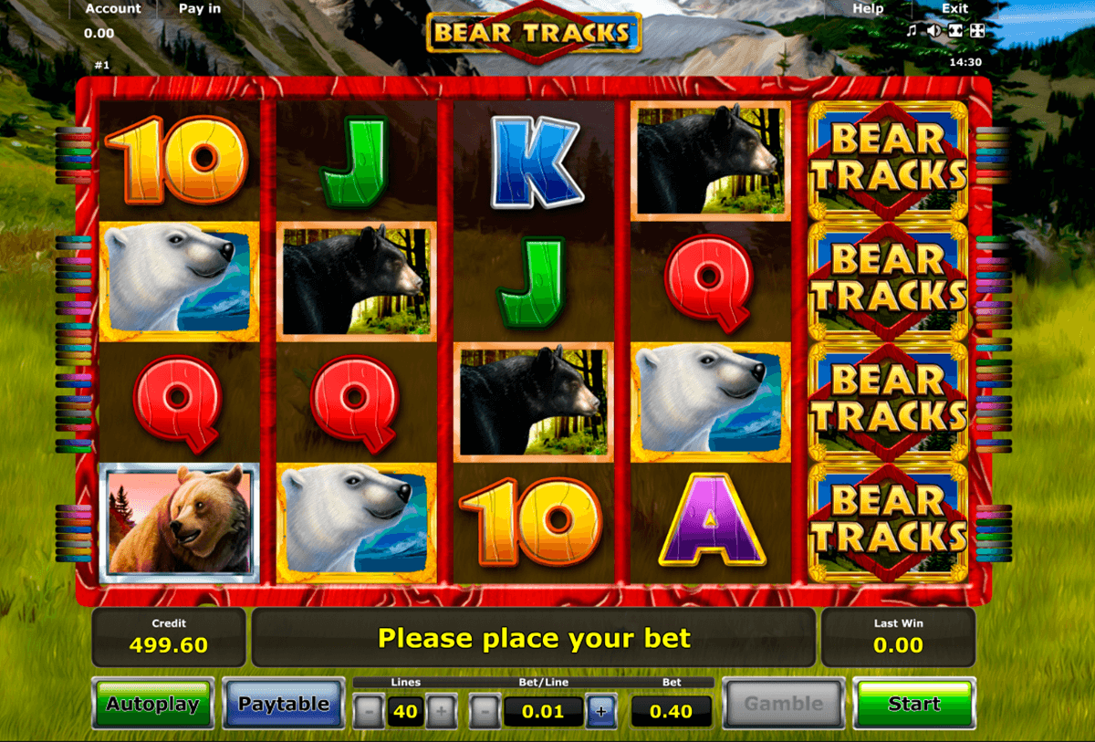 bear tracks novomatic online spielen