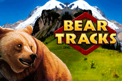 logo bear tracks novomatic